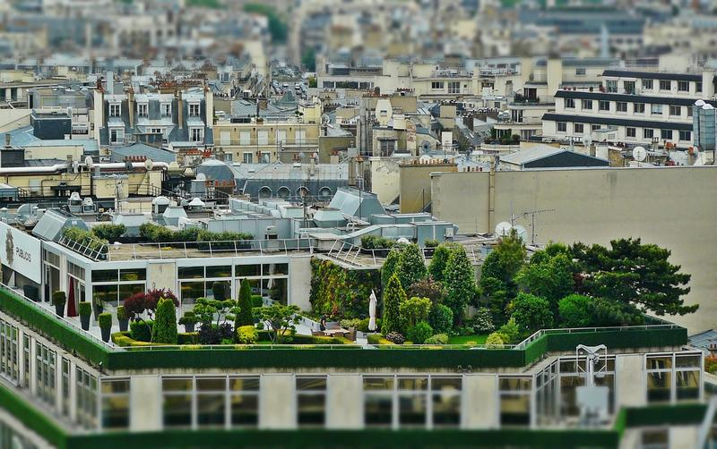 Tips on Rooftop Gardening