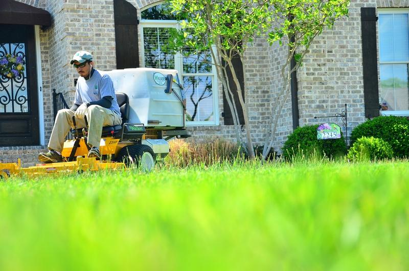 Lawn Maintenance and Gardening Tips