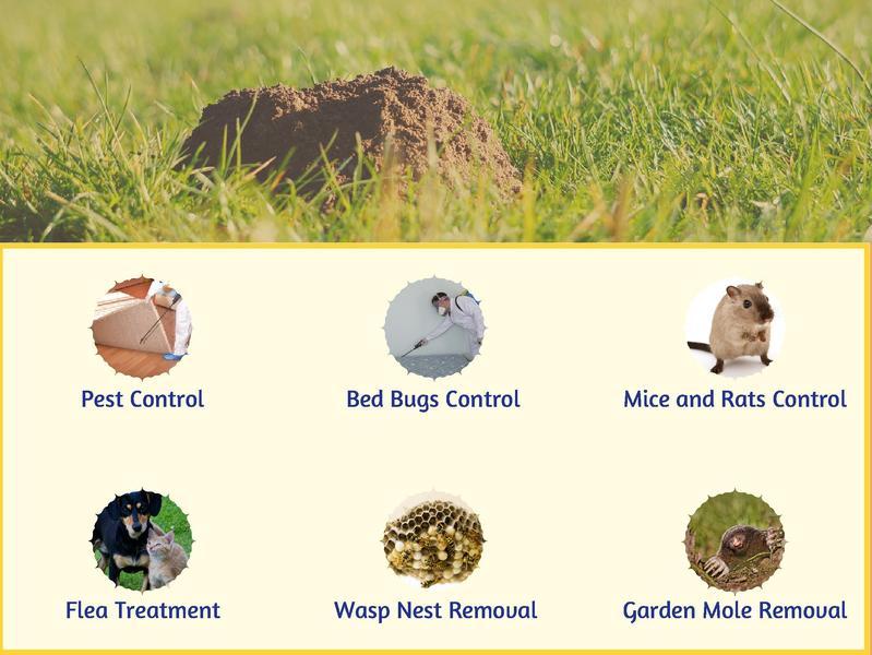 Stann Pest Control