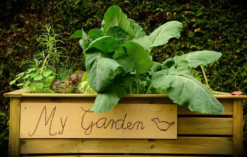 6 Ways to Keep Your Garden Healthy