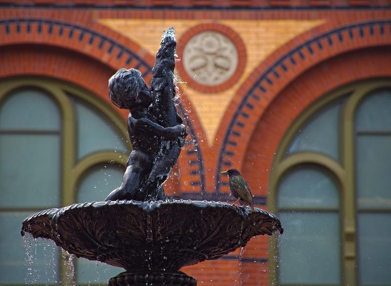 8 Tips to Maintaining Your Outdoor Water Fountain