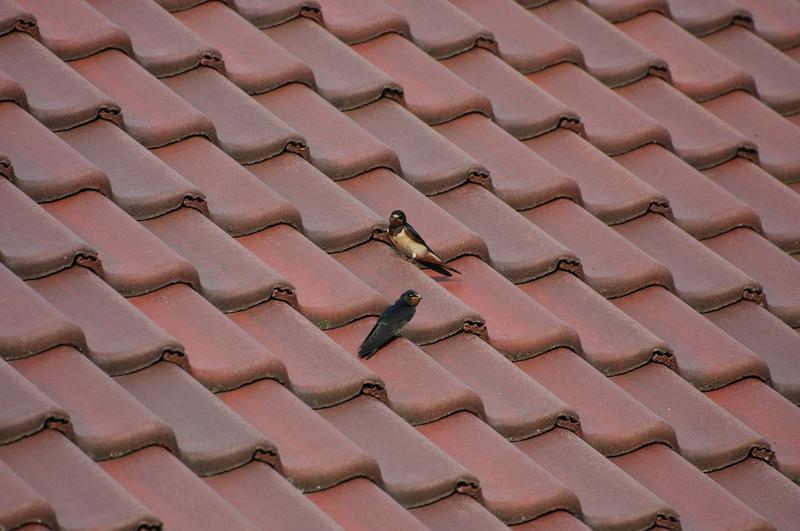 Tile roofs: Not just for warmer climates