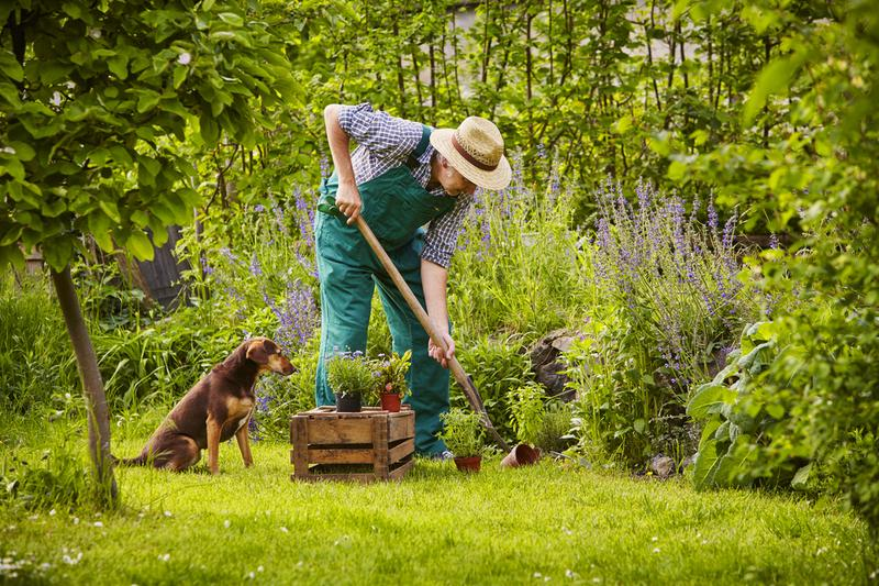 DIY Backyard Ideas to Delight Your Dog For This Summer