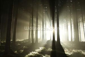 Light and Dark Forest