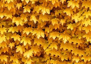 Harvest -  Autumn Leaf Vinyl Flooring